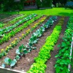 8 Tips to Make Gardening Easier